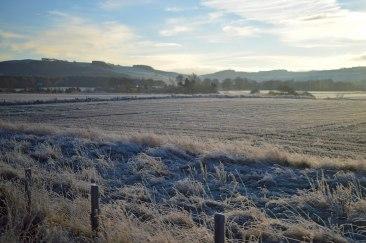 frozenfield