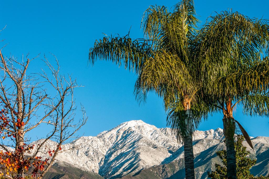 ebe4b2167e8 california-winter – UCEAP England