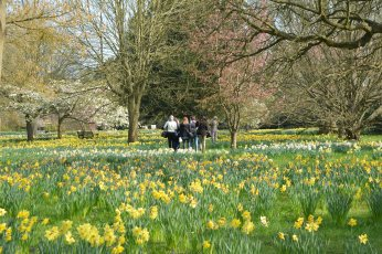 daffodil students